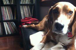 Fred The Beagle